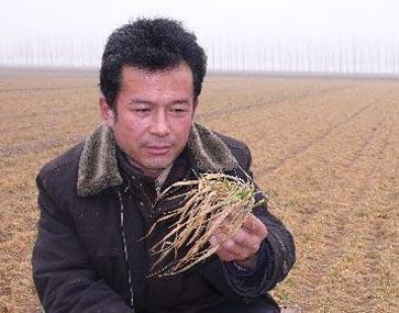 河南驳斥抗旱不值论 农民称浇地赔钱