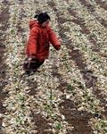 大旱灾暴露出农田水利基本建设欠账太多