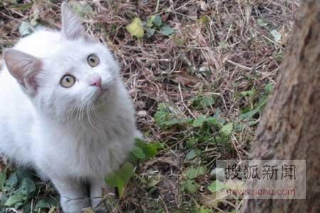 猫咪爬树简笔画