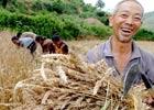我国正式废除农业税