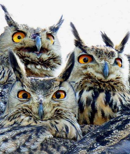 叫醒所有居住在山里的动物居民